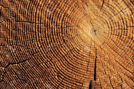 5676489-los-anillos-de-crecimiento-en-el-extremo-de-un-tronco-cortado-Brown-Foto-de-archivo