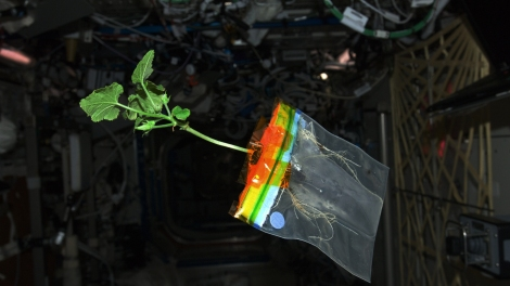 ISS-30_Zucchini_plant_in_the_Destiny_lab.jpg